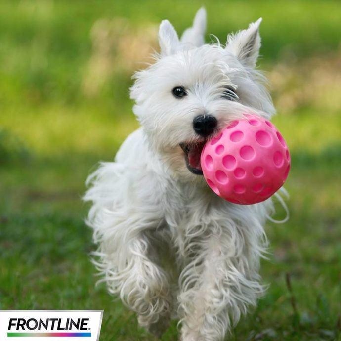 ¡Cuida a tu perro con FRONTLINE TRI-ACT!