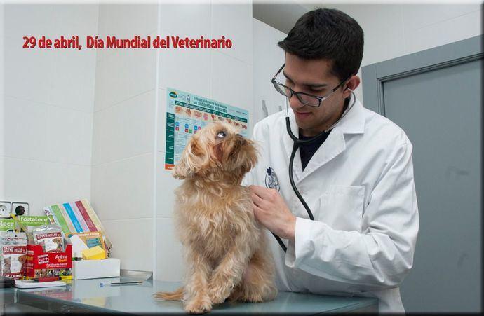 La profesión Veterinaria y las clínicas de pequeños animales