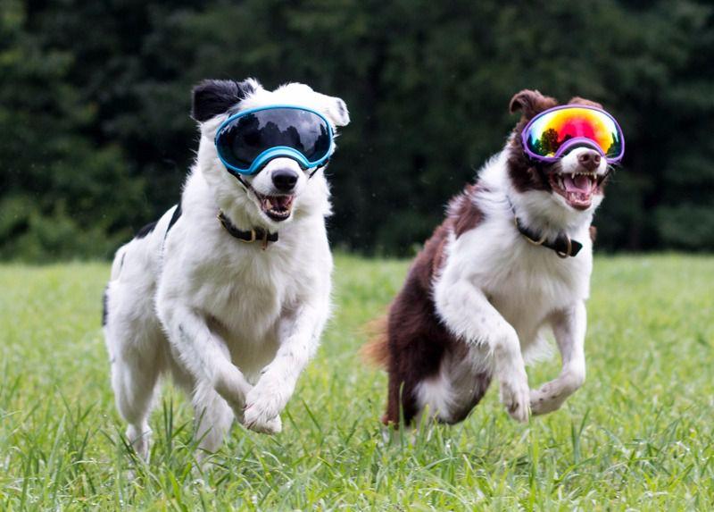 gafas especiales para perros