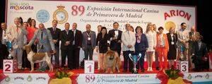 89º Exposición Internacional Canina de Primavera de Madrid 2017 Mejores ejemplares