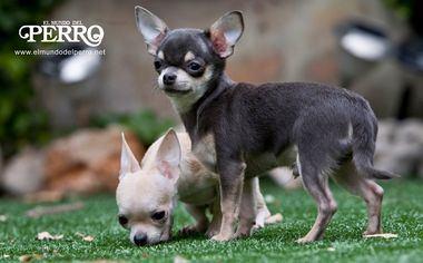 ¿Son nuestros perros demasiado humanos?