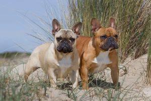 Perros sin sobresaltos