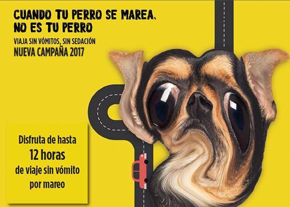 Cuando tu perro se marea, no es tu perro