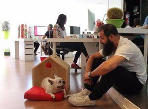 Jefe, contrata a mi perro El 23 junio: 'Día de llevar tu perro al trabajo'