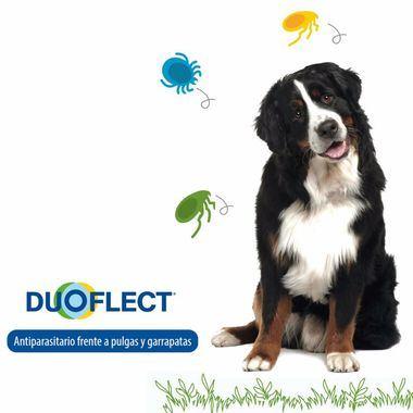 ¿Sabes que tu perro puede tener pulgas aunque no las veas?