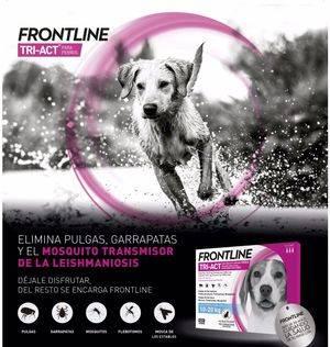 Frontline Tri-Act para perros refuerza la protección de tu mascota frente a los parásitos externos con nuevas y exclusivas fortalezas