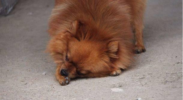 ¿Por qué algunos perros se chupan las patas?