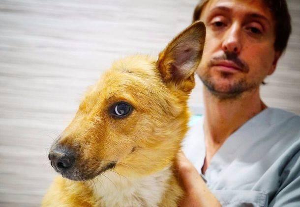 Sky, el perro maltratado, se recupera gracias a la cirugía veterinaria