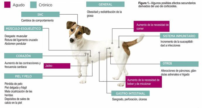 Tratamiento del picor de origen alérgico en los perros. Inconvenientes del uso de corticoides