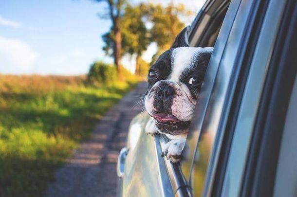 Cómo viajar en verano con tu perro