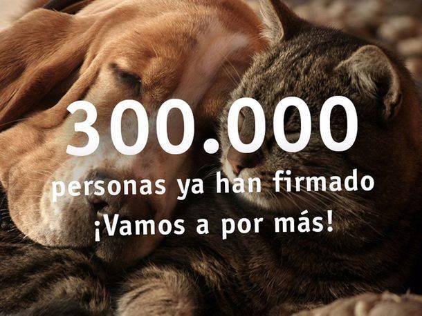 300.000 personas dan su apoyo a la campaña #AnimalesNoSonCosas