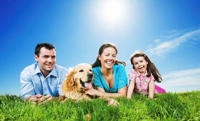 ¿Qué puedo hacer con mi perro estas vacaciones?