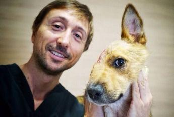 El caso de Sky, el perro maltratado, referente en cirugía veterinaria europea