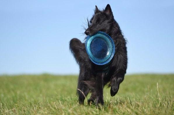 Los mejores deportes para practicar con tu perro en verano
