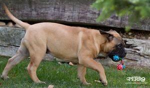 Ejercicios para realizar con nuestro perro y reconocer sus destrezas