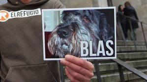 La Audiencia Provincial de Cantabria confirma la condena de 8 meses de prisión por matar a patadas al perro Blas