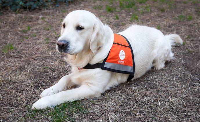 Fundación Affinity lleva por primera vez perros a los juzgados para ayudar a las víctimas de violencia de género