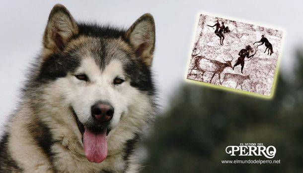 ¿De dónde viene el perro y su amplia variedad de razas?