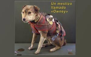 «Owney» fue disecado y en 1911 y fue cedido al Instituto Smithsoniano.