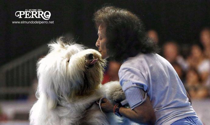 Más allá del lazo emocional que se establece entre un perro y su amo