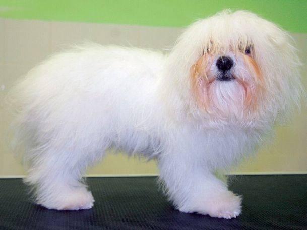 El cepillado de perros de pelo largo