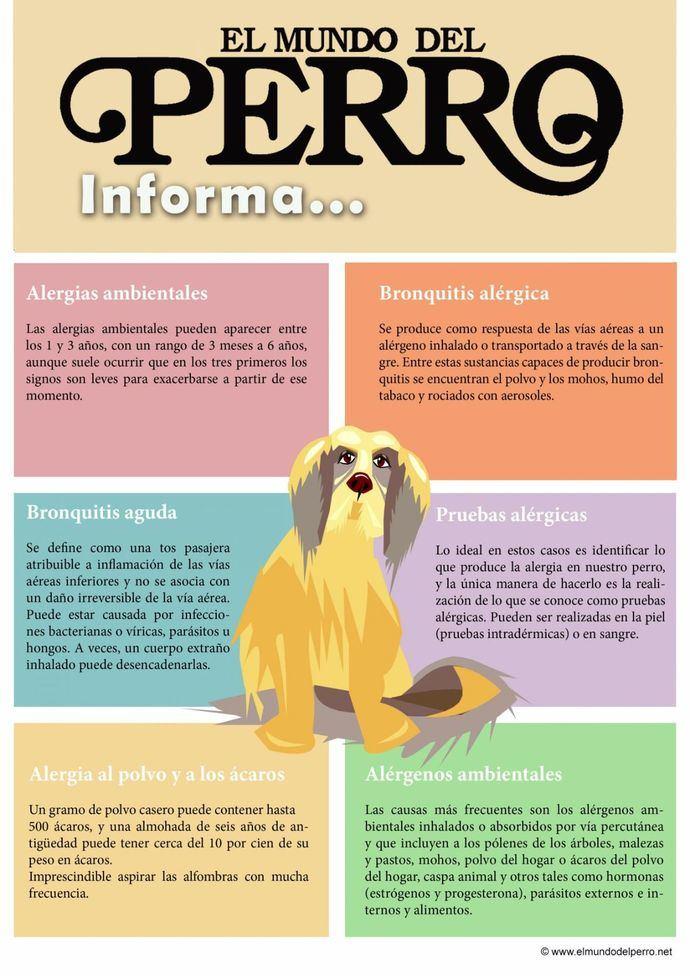 Algunos consejos prácticos para evitar o minimizar los síntomas en un perro con alergia