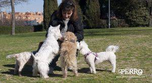 #AnimalesNoSonCosas llego ayer al Congreso para someterse a consideración de los partidos políticos