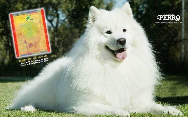 El nuevo año chino del perro