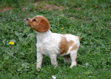 Cachorro du Poulit San Danis. Prop.: Pascal Bardon.