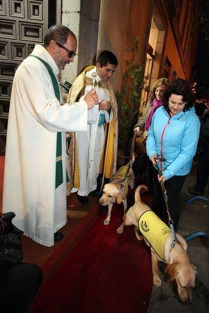 Los perros guía de la ONCE participan en las Vueltas de San Antón