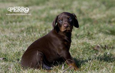 ¿Qué debe saber un perro para desenvolverse correctamente en sociedad?