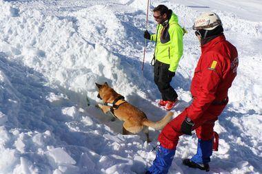 Sierra Nevada acogió las primeras Jornadas de guías y perros detectores de víctimas vivas sepultadas en aludes