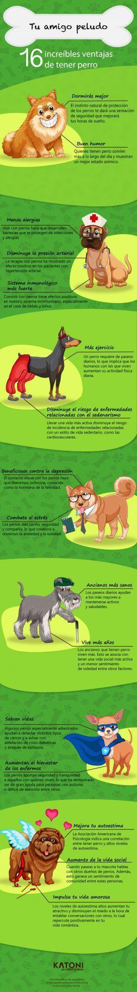 Beneficios que nos aporta la compañía de las mascotas
