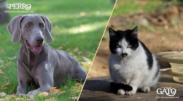 La Fundación Affinity celebra la entrada en vigor en España del Convenio europeo sobre protección de animales de compañía