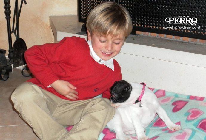 ¿Cómo enseñar a los niños a respetar a los perros?