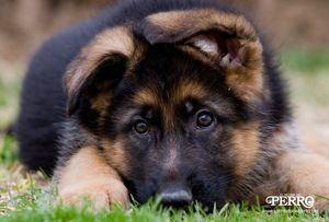 APDDA promueve 30 enmiendas para mejorar la reforma del Código Civil en materia de bienestar de los animales