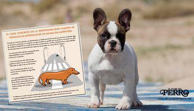 La responsabilidad como propietarios de un animal doméstico incluso en casos de pérdida