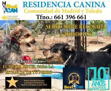 Residencia canina(Comunidad de Madrid y Toledo)