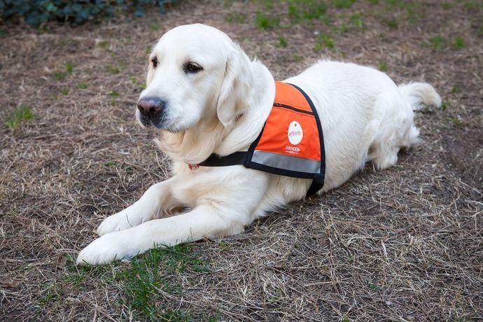 Fundación Affinity dedica el año a concienciar sobre los #AnimalesQueCuran