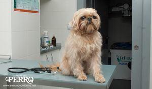 APDDA pide reducir al 10% el IVA de los servicios veterinarios