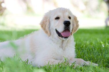 Aspectos relevantes de la higiene en nuestros perros