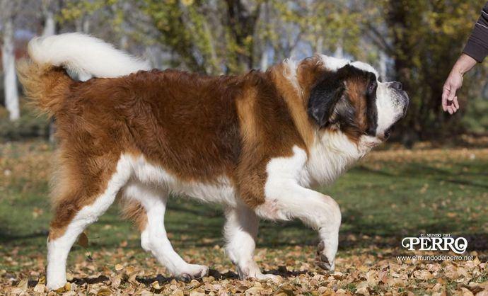 Extraordinarios perros
