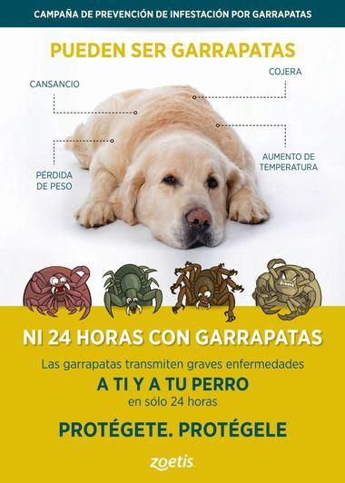 """Se inicia la campaña anual de prevención contra las garrapatas: """"Ni 24 horas con garrapatas: Protégete. Protégele"""""""