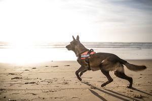 Genial innovación para la comodidad de los perros y los dueños