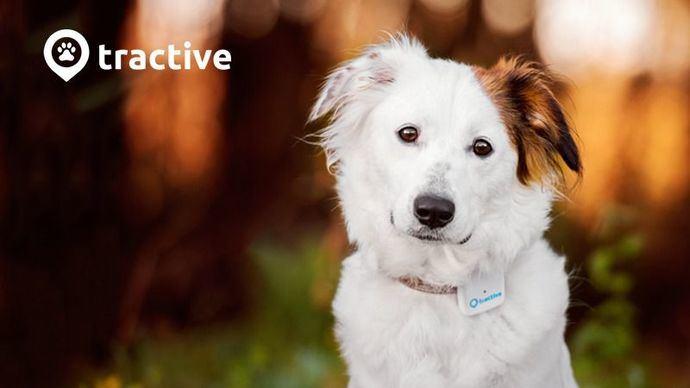 No más perros perdidos con Tractive GPS: La correa digital para tu perro