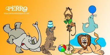 APDDA promoverá una ley estatal para prohibir los circos con animales