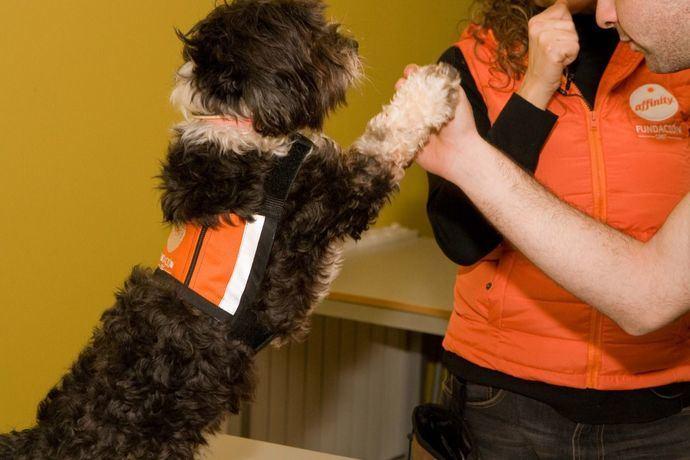 Fundación Affinity demuestra los beneficios de las terapias con perros en adolescentes tutelados