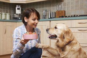 La forma más adecuada de alimentar a los perros de mayor edad