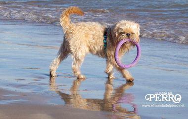 El ICOVV advierte de los riesgos sanitarios que conlleva no cumplir las normas en las playas para perros