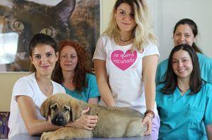 Antalya, una perrita rescatada de el abandono con el equipo veterinario de El Refugio.